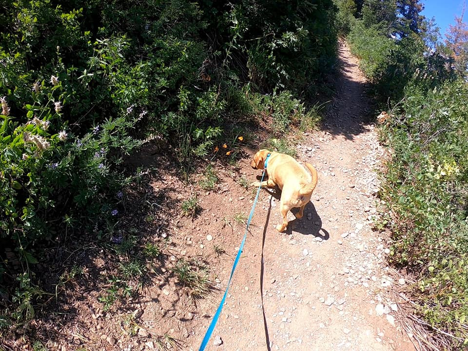 Ogden Canyon Overlook Trail July 2019 with Stevie Licks